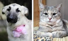 Котопёс недели: кошка Мануэла и собака Элис