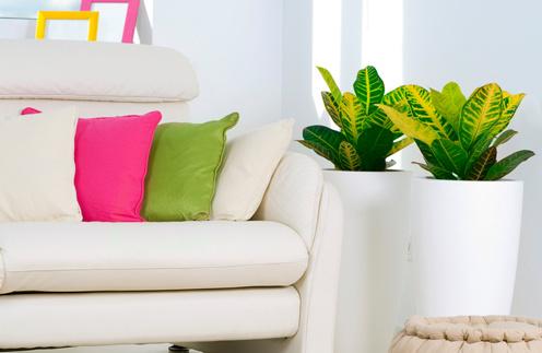 Полностью преобразить чужой диван поможет большое покрывало, а также ворох ярких подушек, а комнатные растения добавят дому уют.