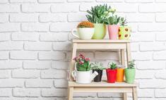 Аленький цветочек: полезные растения для нашего дома