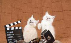 Для семейного просмотра: лучшие фильмы про животных