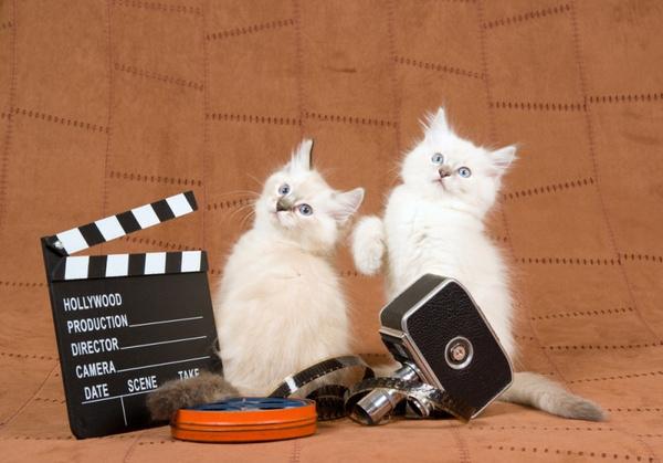 Кино про животных