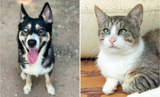 котопёс недели собака майна кот прапор ждут хозяев