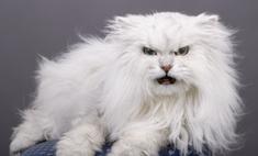Общение с питомцем: как успокоить кота, когда он злится или бесится?