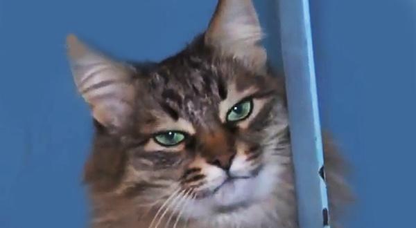 Кошка Машка из Обнинска