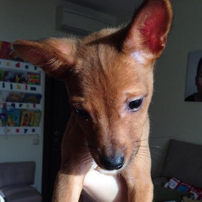 А эту собачку подарил Кристине Асмус Гарик Харламов