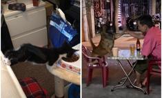 кошачья тяга другие видео умилили неделе