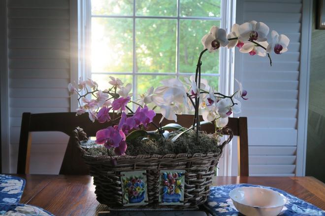 Если у орхидеи вянут листья