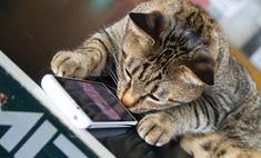 Мы протестировали на животных мобильные игры для котов (видео)