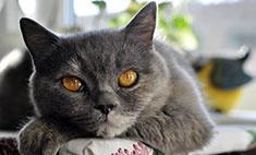Красота по-кошачьи: голосуем за самых-самых!