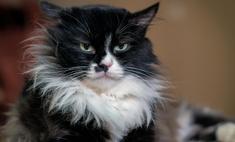 Способны ли коты любить? Мнение ученых