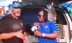 Телеведущая решила появиться в кадре с лемуром, но тот сорвал с нее парик (видео)