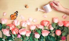 11 растений, которые поднимают настроение