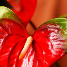Цветок-фламинго