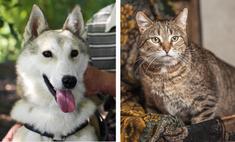 Котопёс недели: пёс Ной и кот Спартак