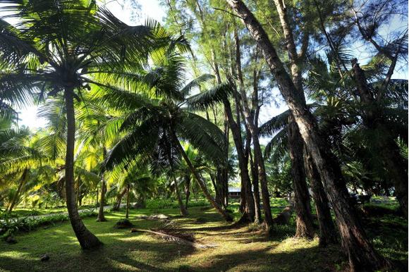 Ромовый дневник: лучшее на Сейшелах | галерея [4] фото [4]