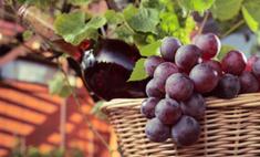 Красное вино заменяет тренажеры