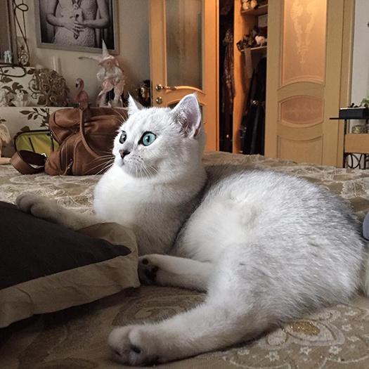 Звездные питомцы: фото, видео, домашние питомцы, Анастасия Макеева, кошка Рокси