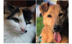 Котопёс недели: кошка Монро и собака Симка