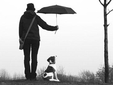 Швейцарским собакам и кошкам хотят предоставить адвокатов