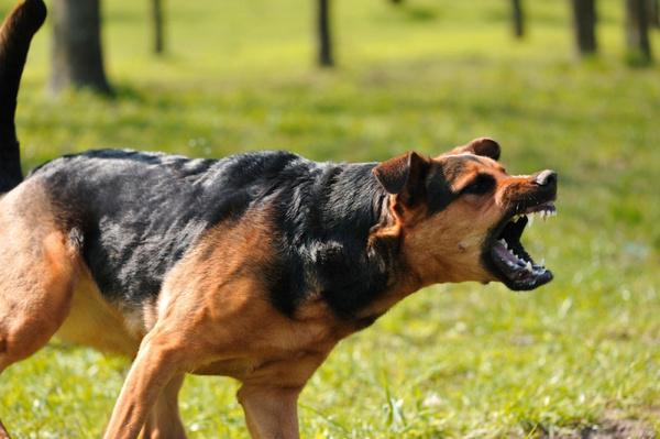 Если напала собака