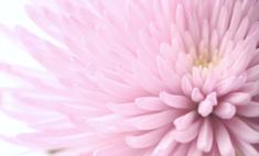 Весеннее настроение: 15 новых ароматов