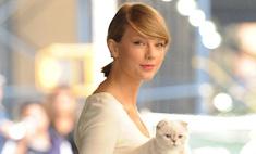 Тейлор Свифт вышла в свет с любимой кошкой