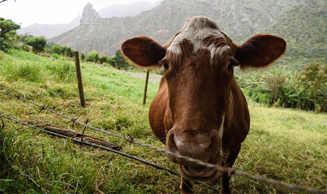 Полезно ли нам есть мясо?