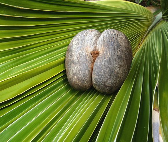 Ромовый дневник: лучшее на Сейшелах | галерея [2] фото [4]
