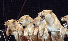 В Греции запретят цирковые номера с животными