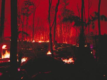 Пожар на Алтае
