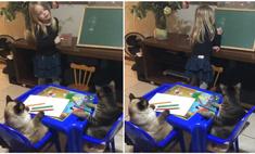 видео кошка котов