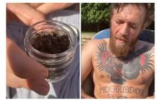 конор макгрегор выложил видео ест пчел