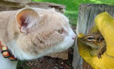гифок встречах котов бурундуками