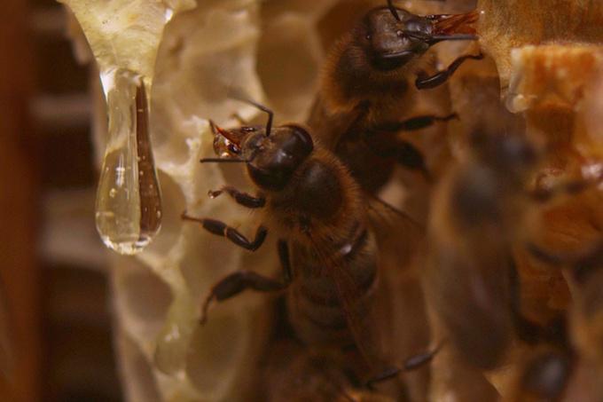 Охотники за медом