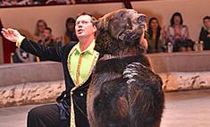 Цирковые медведи ждут от воронежцев варенье