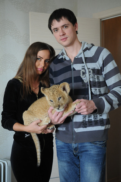 Новосибирск львенок в квартире