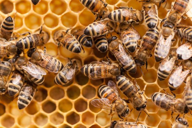 Как развести пчел