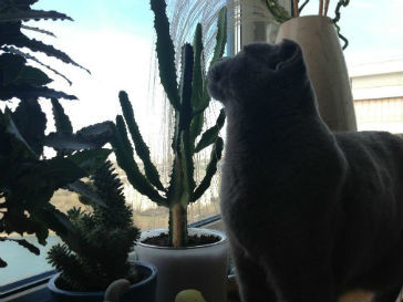 Серый кот фото