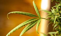 Калифорния отказалась от легализации марихуаны