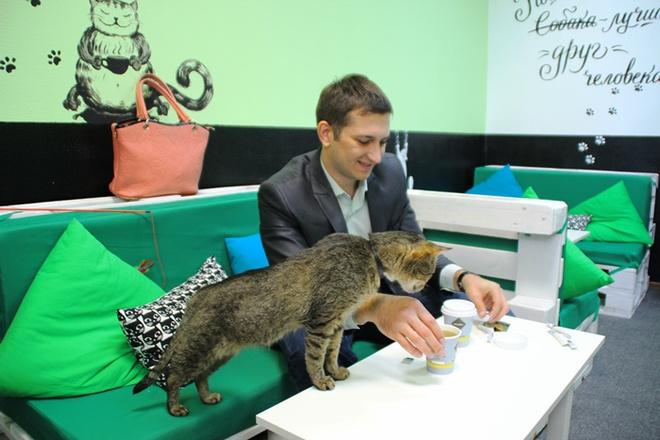 Коты, кошки, котики, мурчалочки