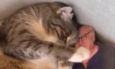 кот полюбил картонного дэнни вито расстается видео