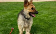 Пес, который выглядит как щенок, хотя ему два года