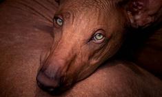 Питомец без запаха: какие собаки не пахнут псиной