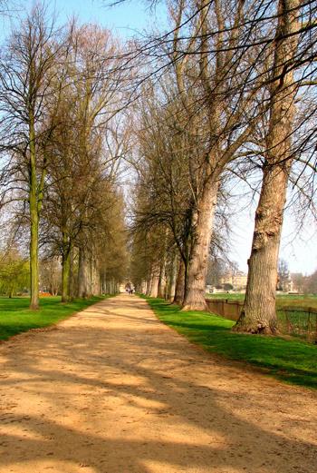 Можно пройтись по аллее New Walk, на которой отец Алисы и декан колледжа Генри Лиделл посадил тополя.
