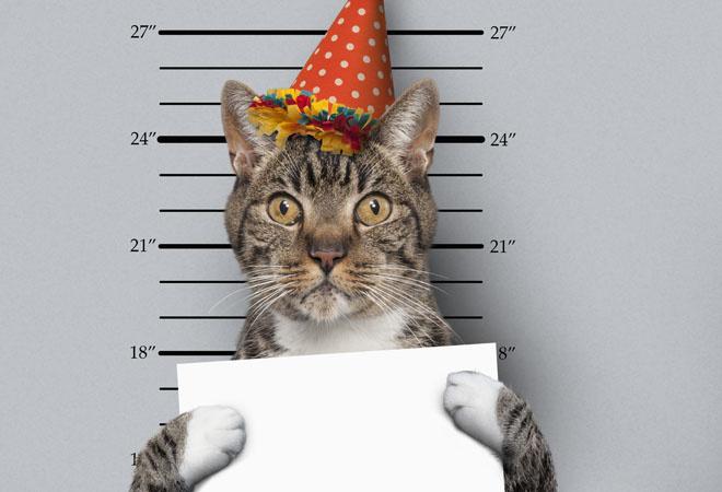 Кот попал в книгу Гиннеса фото