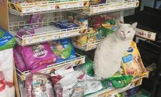 бродячий кот заманил прохожую отдел кормами животных получил
