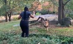 В Бронксе посетительница зоопарка забралась ко льву, чтобы его подразнить (видео)