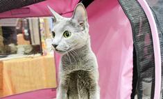 Пушистые, «плюшевые», лысые: самые красивые кошки Волгограда!