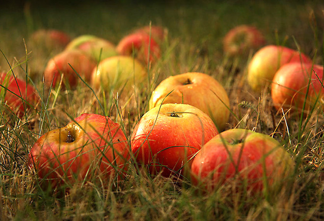 5 октября – День яблок в Петербурге