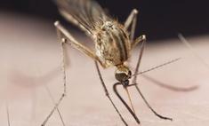 Москву атакуют малярийные комары